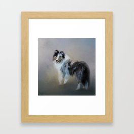 Did You Call Me - Blue Merle Shetland Sheepdog Framed Art Print