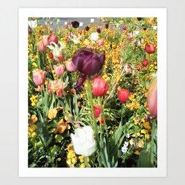 Flower Schadows Art Print