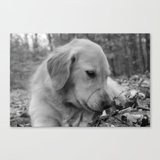Classic Dog Canvas Print