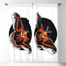 Robin Moth (Hyalophora cecropia)      BUGSPOTTING SERIES Blackout Curtain