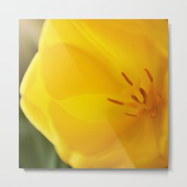 Yellow tulip close up #2 Metal Print