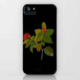Lantana Mary Delany Vintage Floral Collage Botanical Flowers Black Background iPhone Case