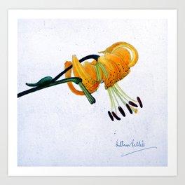 Orange Flower Botanical Illustration - Illustration botanique d'une fleur orange  Art Print