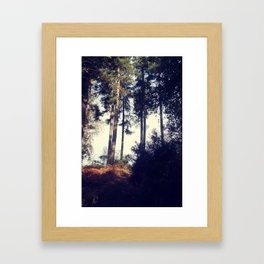 Woodland pine trees. Framed Art Print
