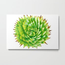The Aloe Polyphylla Succulent, A Realistic Botanical Watercolor Painting Metal Print