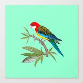 golden-mantled rosella Canvas Print
