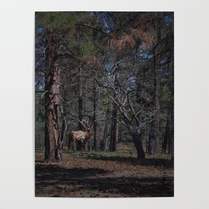 Grand Canyon Elk Poster