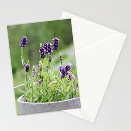 Lavender flower in tin pot Stationery Cards