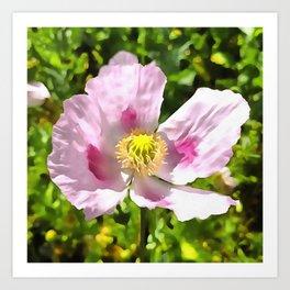 Papaver Somniferum Opium Poppy Art Print