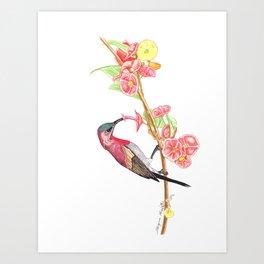 Red Humming bird Art Print