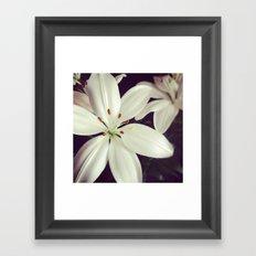 lilys Framed Art Print