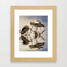 Weißstorch Paar (Ciconia ciconia) Framed Art Print