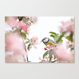 Little bird in beautiful flowering tree  worm in mouth Canvas Print