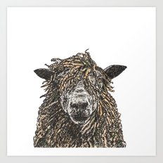 Cotswold Sheep Art Print
