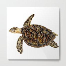 Hawksbill sea turtle (Eretmochelys imbricata) Metal Print