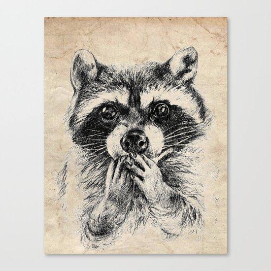 Surprised raccoon Canvas Print
