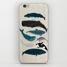 Whales - Pod of Whales Print by Andrea Lauren iPhone & iPod Skin
