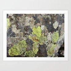 Lichen Art Print