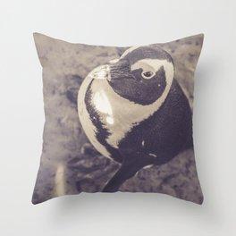 Adorable African Penguin Series 3 of 4 Throw Pillow