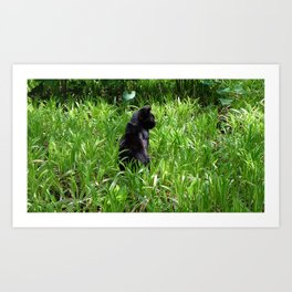 Cat, lawn and sunny day Art Print
