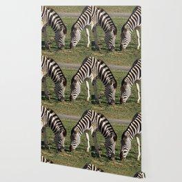 2 Zebras Wallpaper