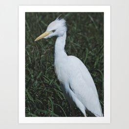 Wild Heron Art Print