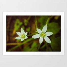 Wild Beauty Botanical / Nature / Floral Photograph Art Print