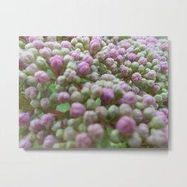 Hyacinth Buds Metal Print