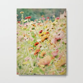 Zinnias en masse with Vintage Effect Metal Print