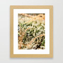 Diamond OG Indoor Hydroponic Close Up Trichomes Viewing Framed Art Print