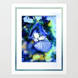 Iris Of The Blues Art Print
