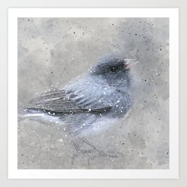Dark Eyed Junco Bird Art Print