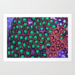 Zoanthus Corals Mix Art Print