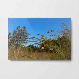Tranquil Field Metal Print