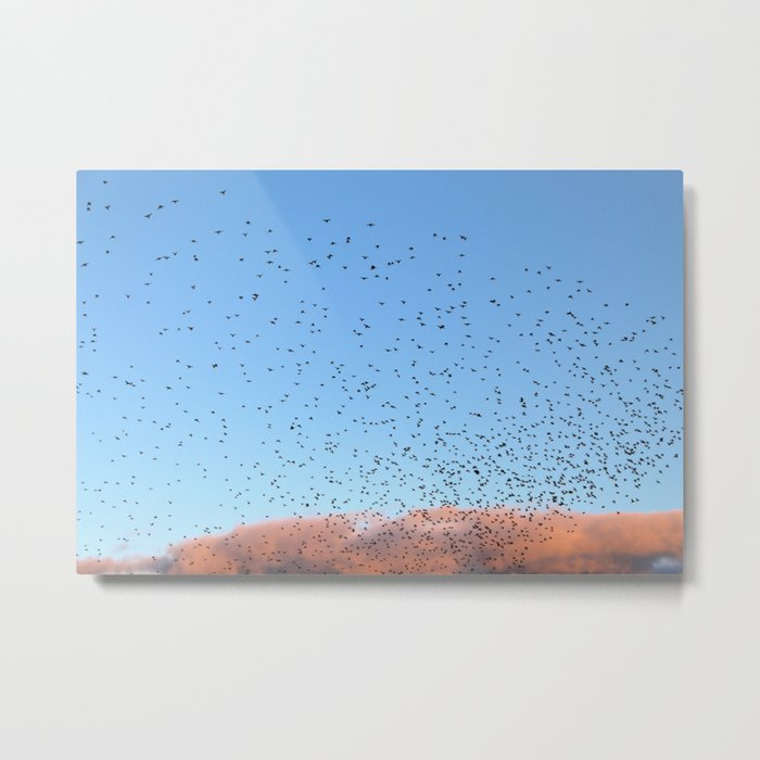 Starling Swarm Metal Print