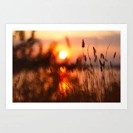 Plants Contre-jour on the Sunset Art Print