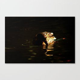 The swimming duck Canvas Print