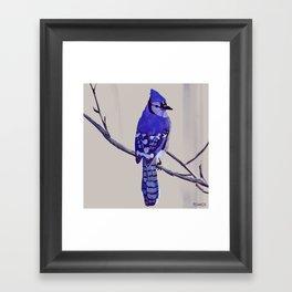 Blue Jay Bird Framed Art Print