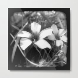 Oxalis - Through The Viewfinder (TTV) Metal Print