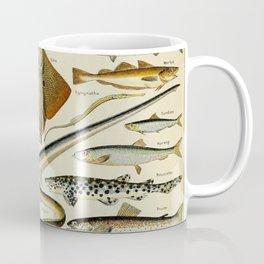 Fish Vintage Scientific Illustration French Language Encyclopedia Lithographs Educational Diagrams Coffee Mug