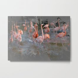 Flamingos in the pond. Metal Print