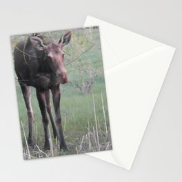 Evening Missy eating willow Stationery Cards