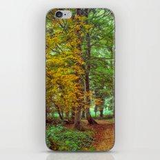 A Walk In The Woods iPhone & iPod Skin