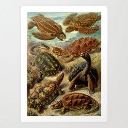 Sea Turtle Collage-Ernst Haeckel Art Print