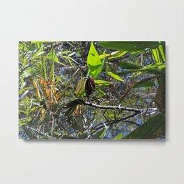 A Green heron in Corkscrew- horizontal Metal Print