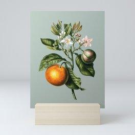Vintage Bitter Orange Botanical Illustration on Mint Green Mini Art Print