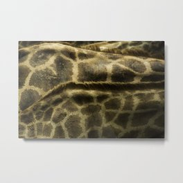 Differences Between Giraffees Metal Print