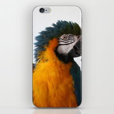 Blue-and-yellow macaw iPhone & iPod Skin