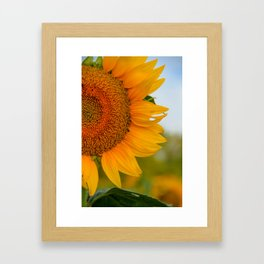 Kansas Sunflower Framed Art Print