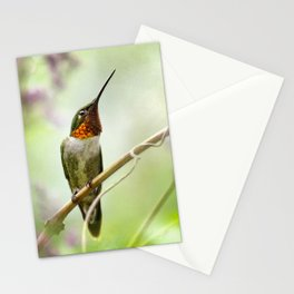 Hummingbird Passion Stationery Cards